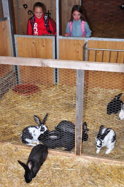 20130910 - Pěší vycházka za zvířátky na Haldu do Boršic